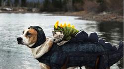 Njihovo prijateljstvo je osvojilo Instagram, a Henry i Baloo postali su nerazdvojni!