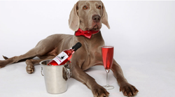 U Zagrebu se otvara prvi restoran za pse, a posluživat će i pseći pjenušac