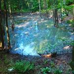 VIDEO I FOTOGRAFIJE s Plitvičkih jezera, koje plivaju i u izmetu, gdje dva novonastala sramotna jezera prijete ekocidom, o čemu i Nijemci pišu (foto: romeo ibrišević)