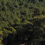 VIDEO Korčuli prijeti podvodna mina iz II. svjetskog rata, s promjerom 150 cm i s najmanje 50 kg razornog eksploziva (foto: romeo ibrišević)