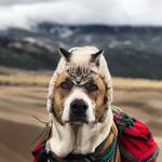 Njihovo prijateljstvo je osvojilo Instagram, a Henry i Baloo postali su nerazdvojni! (foto: Cynthia Bennet/Instagram)