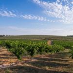 Prije 75 godina obitelj Duboković otišla je s Hvara a sad ponovo u Hrvatskoj sade vinograde, maslinike, voćnjake... (foto: Dean Duboković i Nejc Parnek)