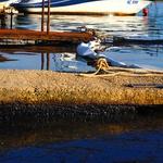 Video i foto galerija: Tirkizno more postalo crna mrlja - nafta u Raškom zaljevu otjerala turiste, uništila posao ribarima, školjkarima, izavala ekocid (foto: romeo ibrišević)