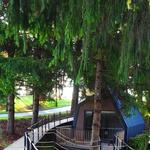 Sagradili atraktivne kućice pored gnijezda kosova, češljugara, kanarinaca, vrabaca..., na drveću šuma pored Plitvičkih jezera (foto: romeo ibrišević)