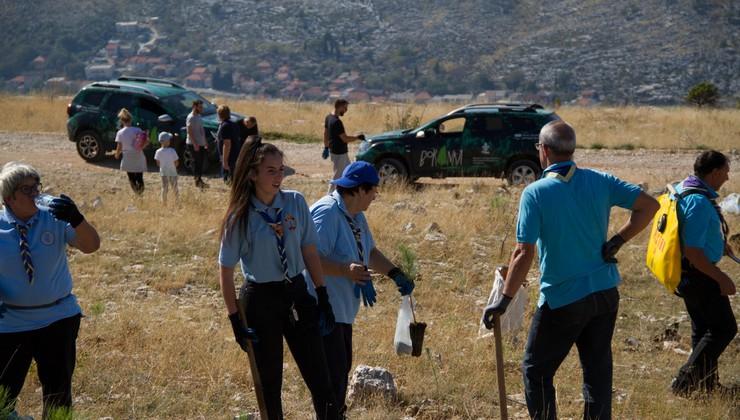 Piromani ne mogu toliko šuma zapaliti koliko ih oni mogu zasaditi. Akcija Boranka prošle je godine zasadila u Dalmaciji 25.000 novih sadnica, a ove će i 45.000