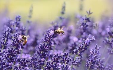Nove EU stratergije za bioraznolikost i ekološki prihvatljivu poljoprivredu umanjuju upotrebu pesticida za 50 posto