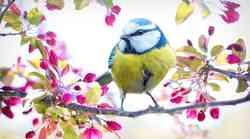 Znanstvenici shvatili zašto i kako ptice mijenjaju boju tijekom evolucije