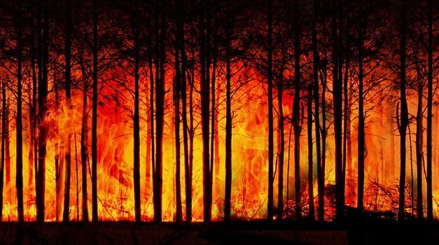 Kalifornija je proglasila izvanredno stanje zbog vrućina i požara