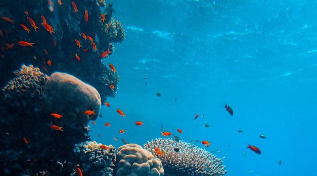 Na dnu oceana pronađeno preko 15 milijuna tona mikroplastike