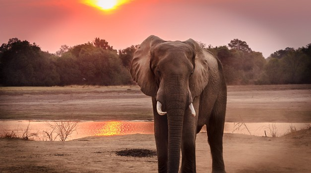 DNK test pomoći će u borbi protiv krivolova - analizira sastav slonovače