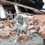 Ta divna stvorenja uz nas su u dobru i zlu! I u Petrinji su psi tragači spasili živote stradalnika u potresu, a Tomo Sukanić spasio je i obitelj, konja, psa, mačku... (foto: Pixell)