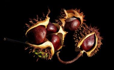"""O kestenima malo drugačije i o činjenici da je to jedini """"orah"""" koji sadrži vitamin C - oni divlji ublažavaju grčeve"""
